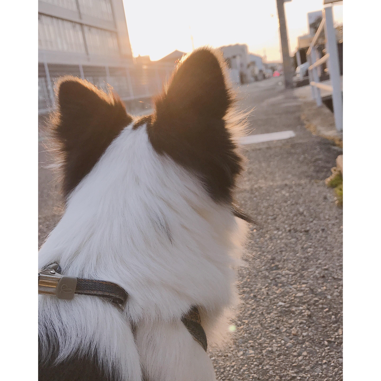 f:id:Yosuke0912:20180314195950j:image