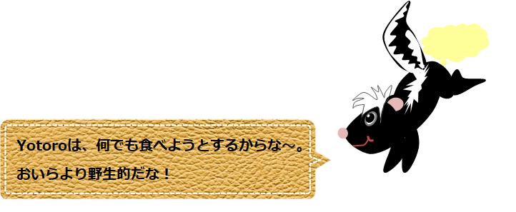 f:id:Yotoro:20200827034410p:plain