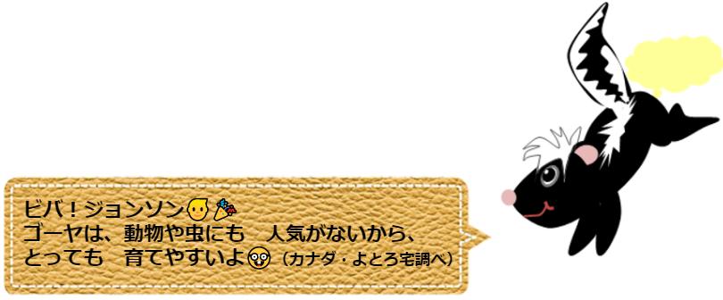 f:id:Yotoro:20210828131724p:plain