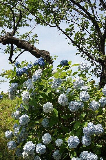 f:id:Youko:20120723072452j:image