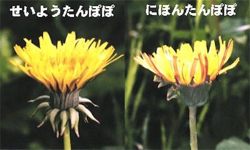 f:id:Yuichibow:20190514143843j:image
