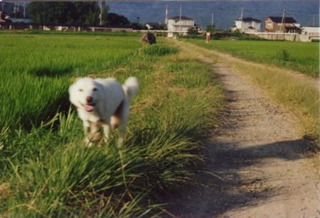 f:id:Yuka-QP:20090225000618j:plain