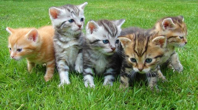 ネコ 猫 猫アレルギー アレルギー 花粉