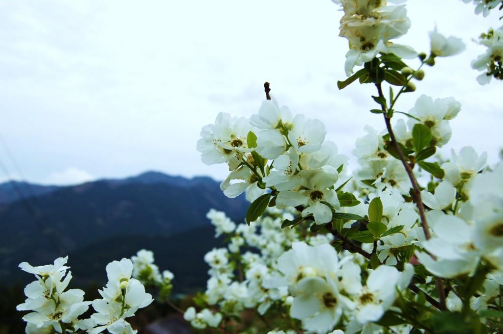 f:id:YukiNOTE:20170422153458j:plain