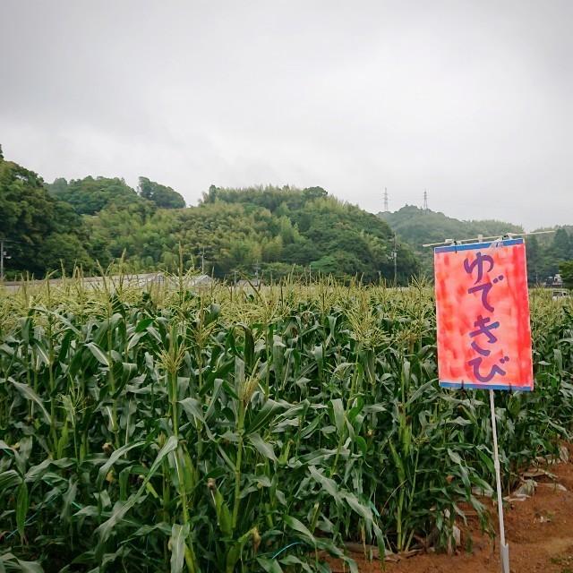 f:id:YukiNOTE:20200626055348j:image