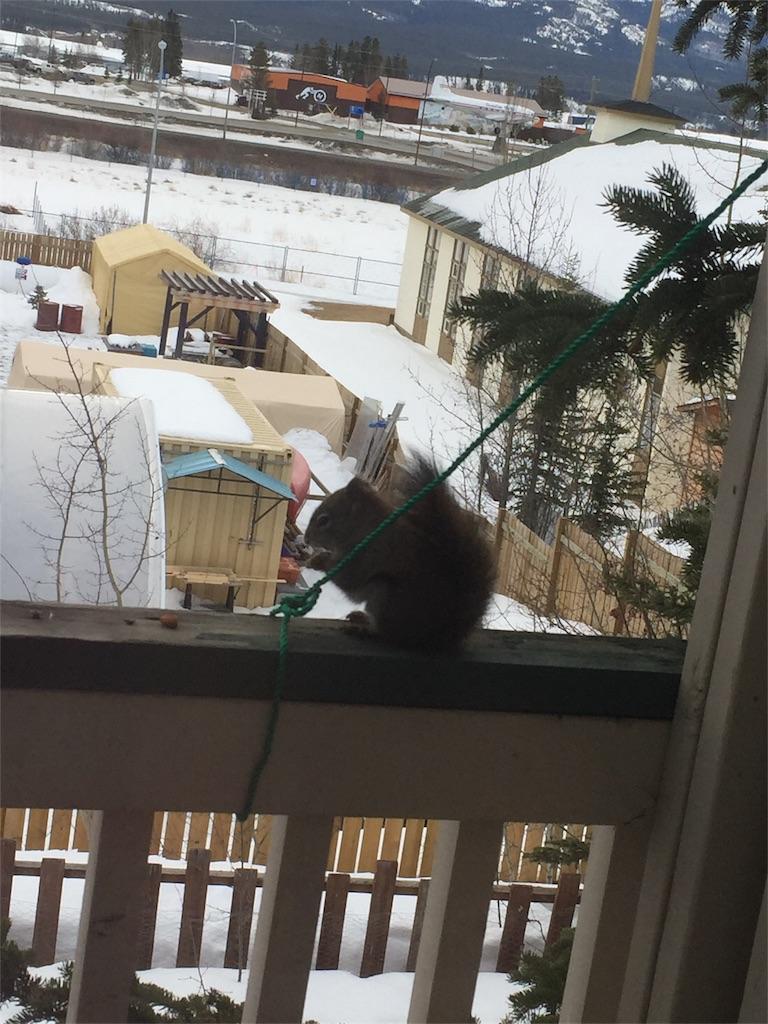 f:id:YukonWhitehorse:20180410125905j:image