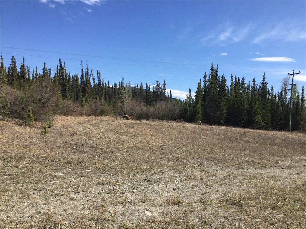 f:id:YukonWhitehorse:20180523151712j:image