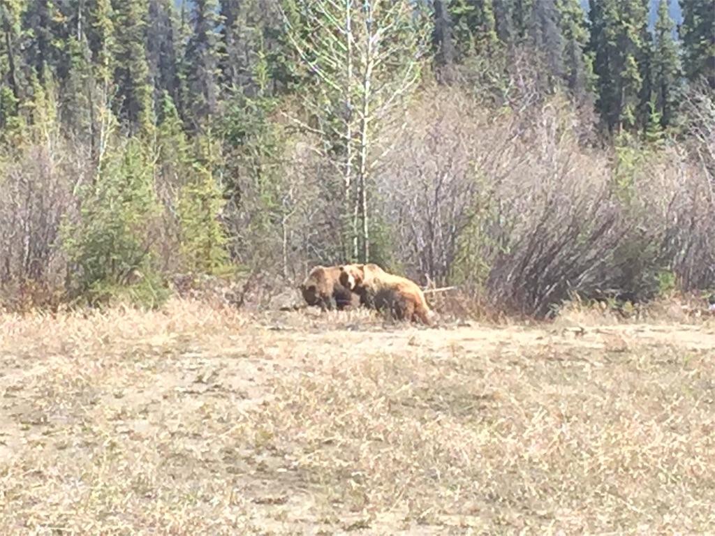 f:id:YukonWhitehorse:20180523151729j:image