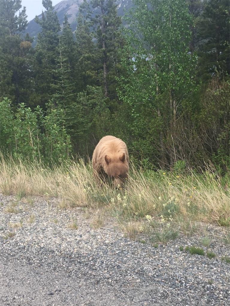 f:id:YukonWhitehorse:20190531144909j:image