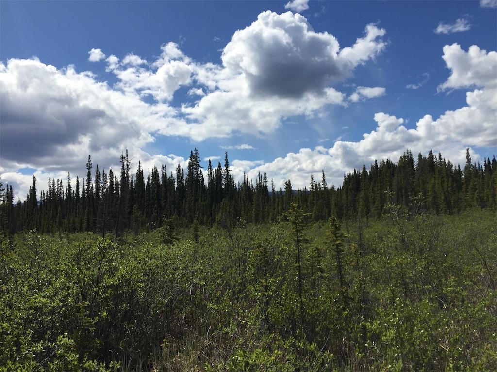 f:id:YukonWhitehorse:20200607154200j:image