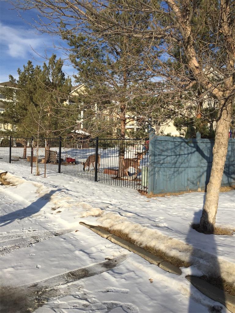 f:id:YukonWhitehorse:20201228044606j:image