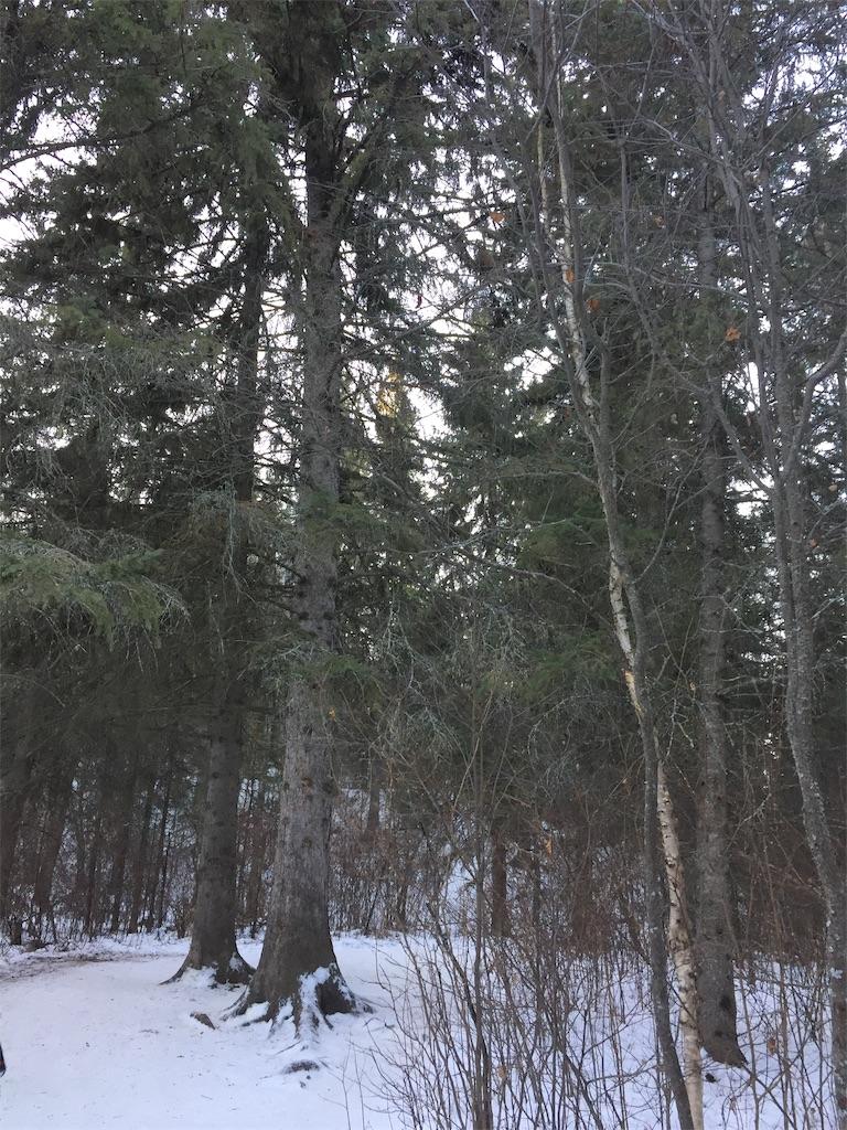 f:id:YukonWhitehorse:20210118033501j:image