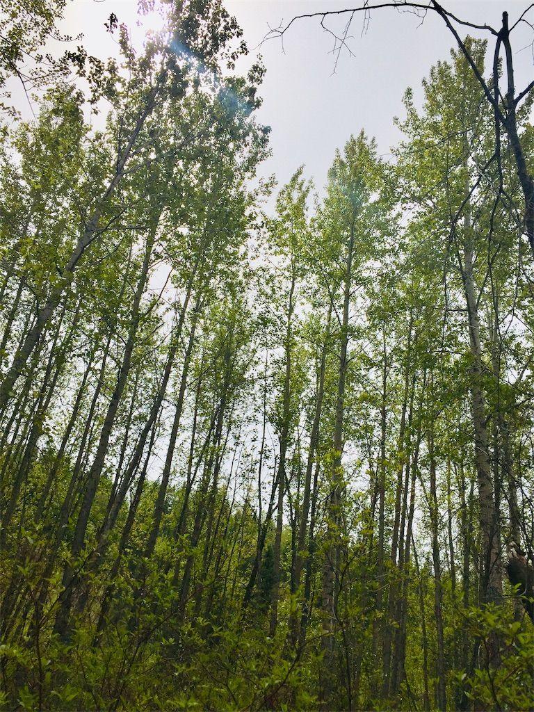 f:id:YukonWhitehorse:20210525050830j:image