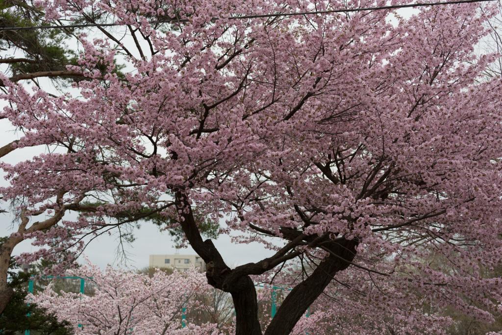 f:id:Yume-jun:20140505232308j:image:w640