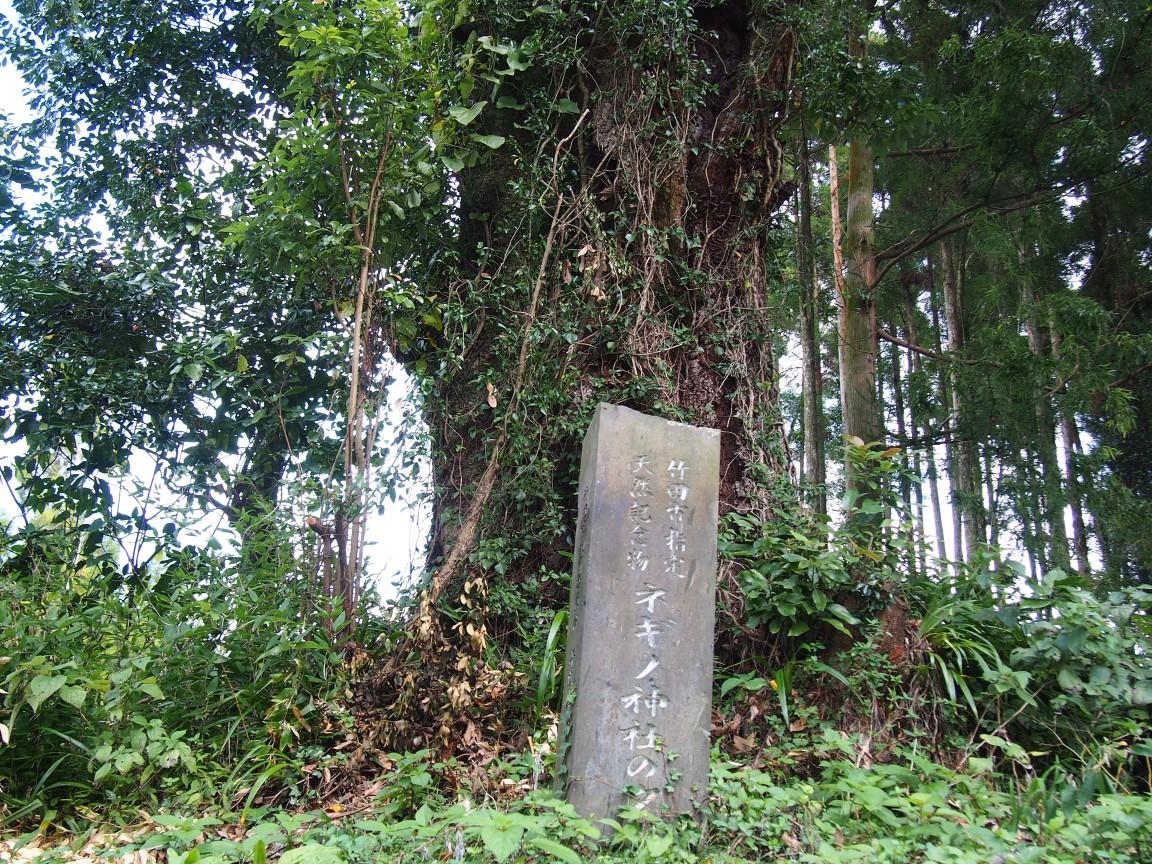 f:id:YumiAIKAWA:20201013164231j:plain