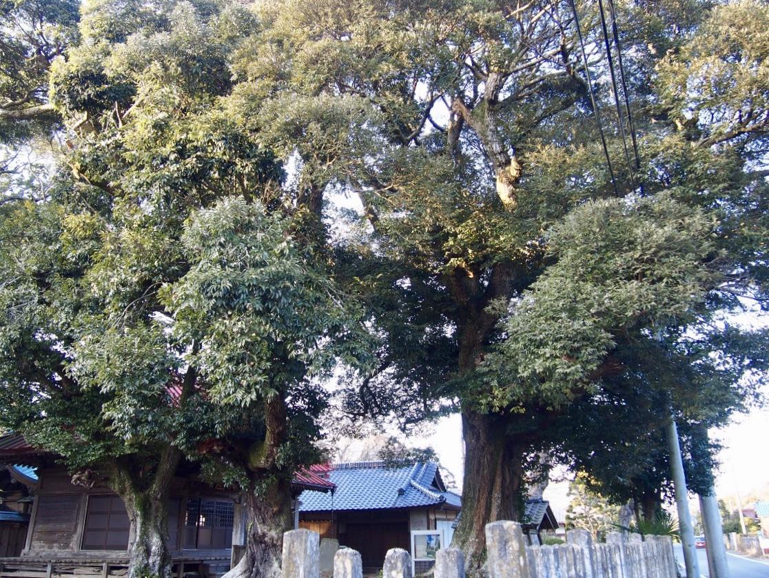 f:id:YumiAIKAWA:20210117112313j:plain