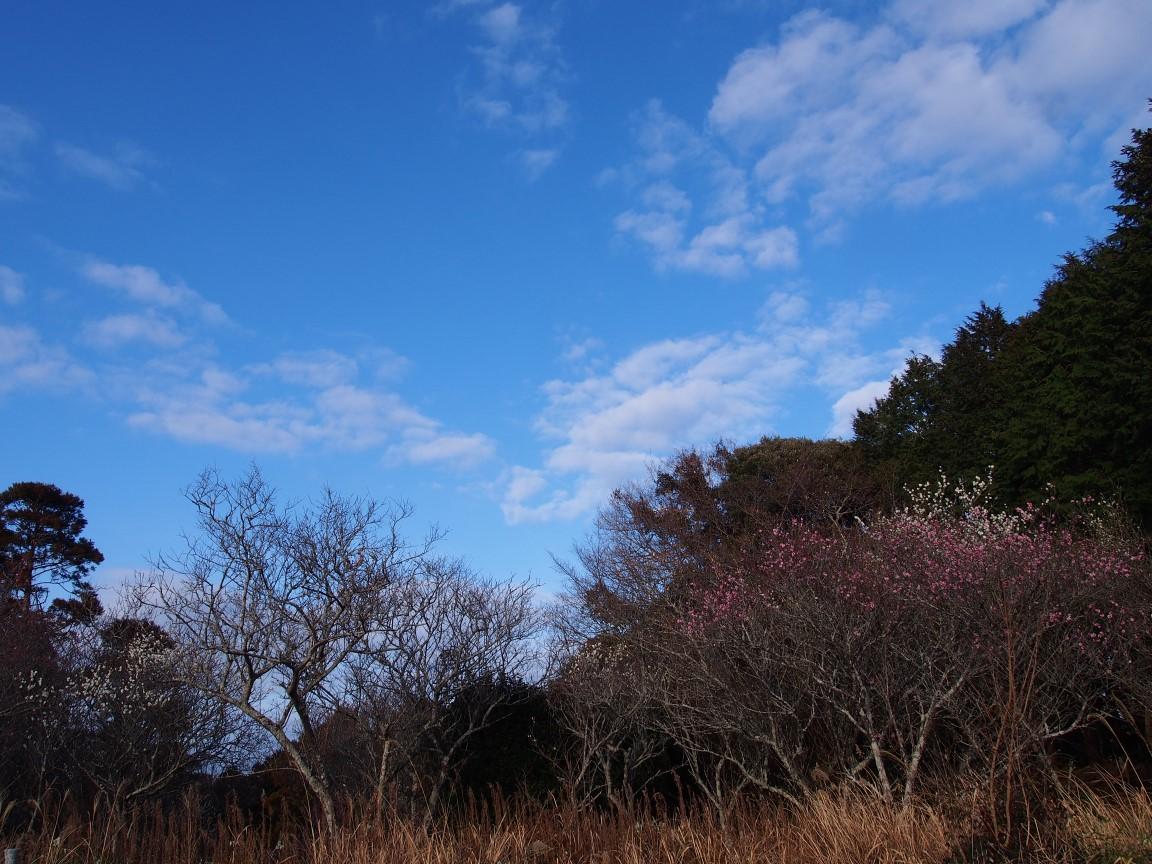 f:id:YumiAIKAWA:20210215070158j:plain