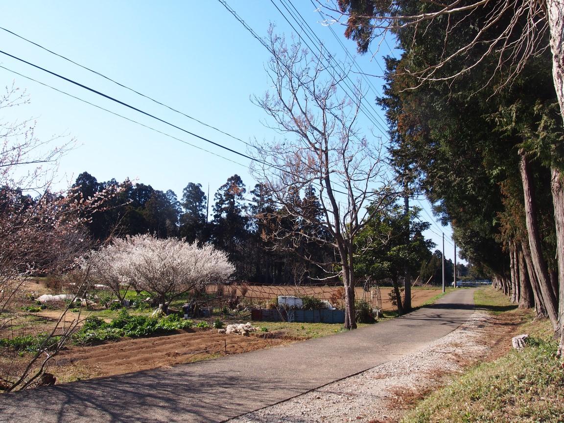 f:id:YumiAIKAWA:20210301011643j:plain