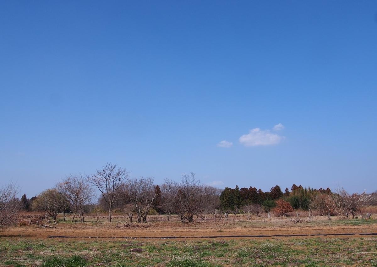 f:id:YumiAIKAWA:20210311224624j:plain