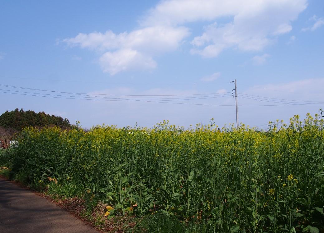 f:id:YumiAIKAWA:20210327021815j:plain