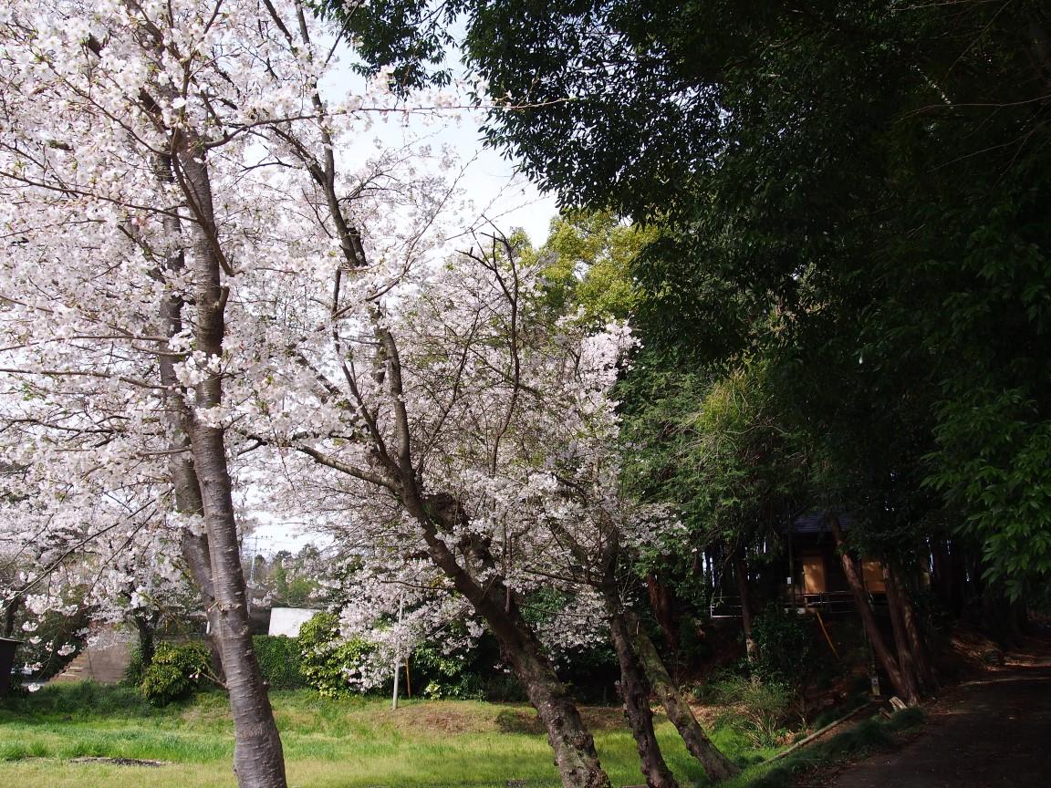 f:id:YumiAIKAWA:20210330041252j:plain