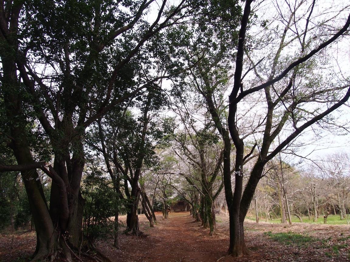 f:id:YumiAIKAWA:20210330060113j:plain