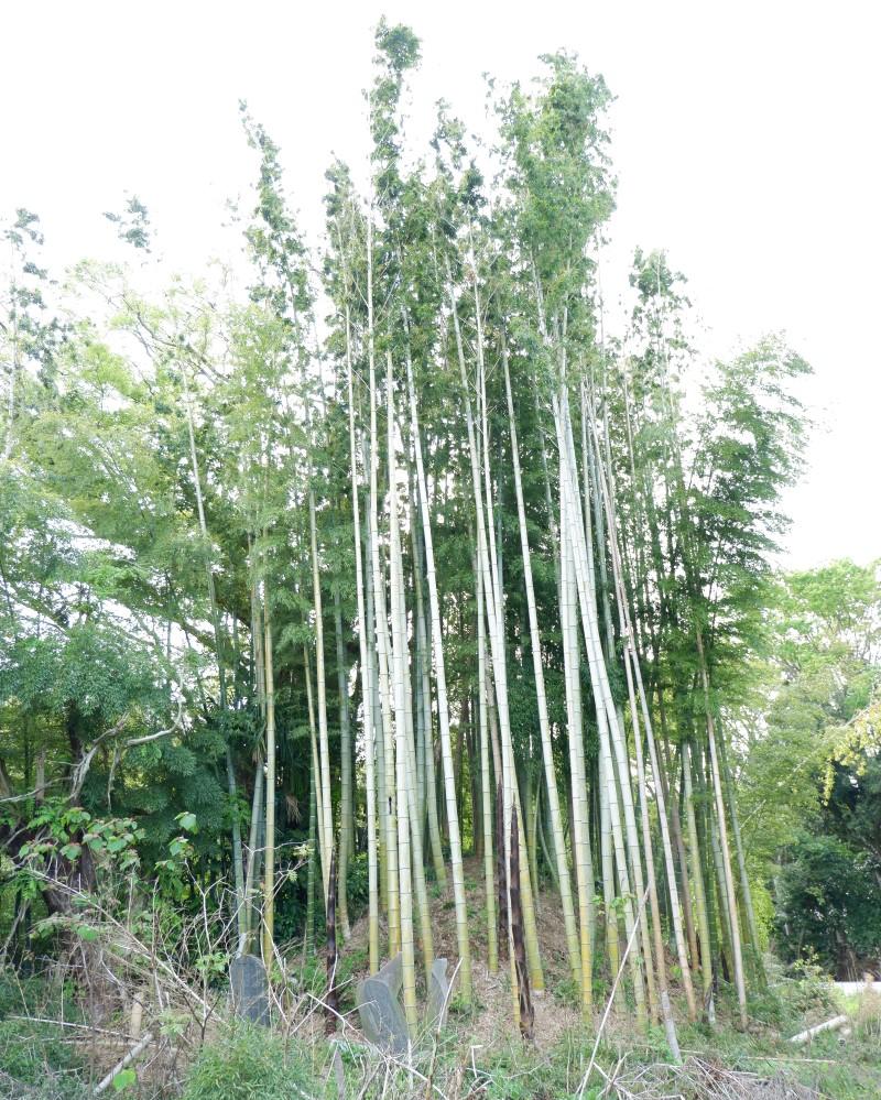 f:id:YumiAIKAWA:20210416064247j:plain