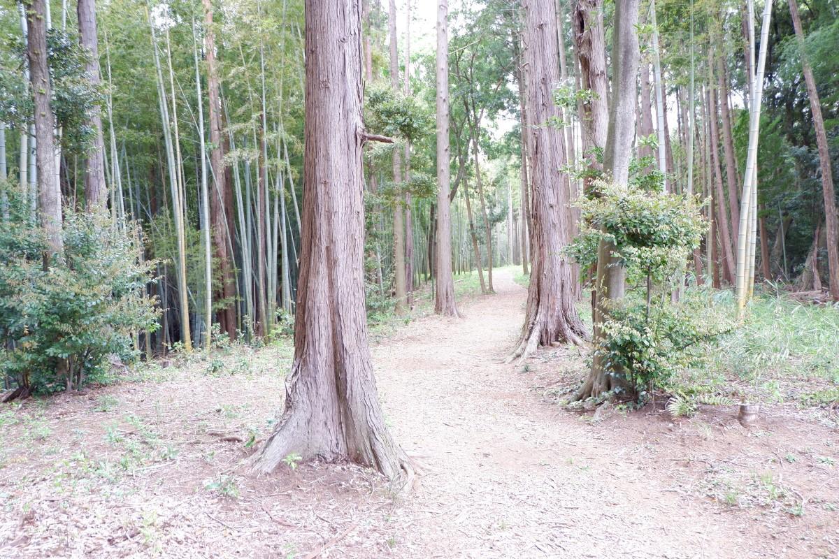 f:id:YumiAIKAWA:20210422082916j:plain