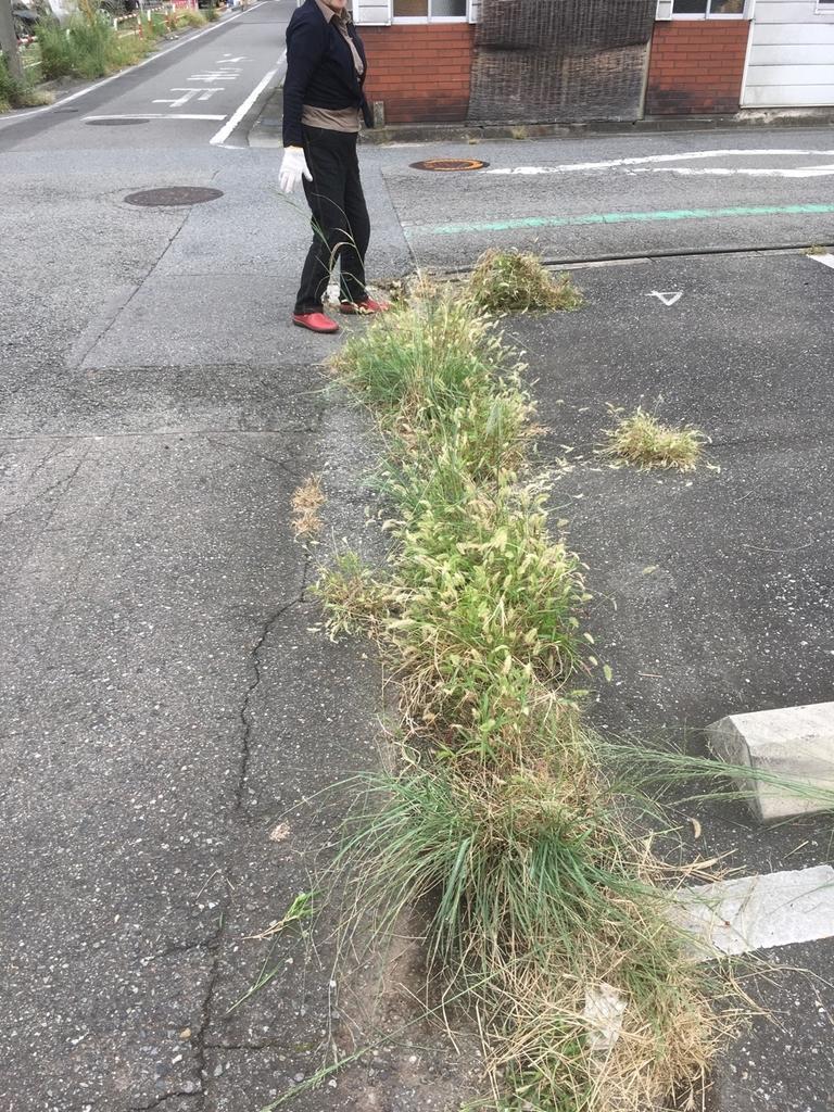 草刈り前の駐車場