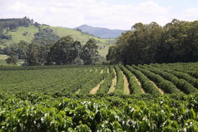 ブラジルの農園