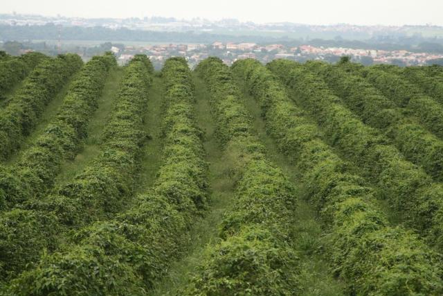 ブラジルサンパウロ州の農園