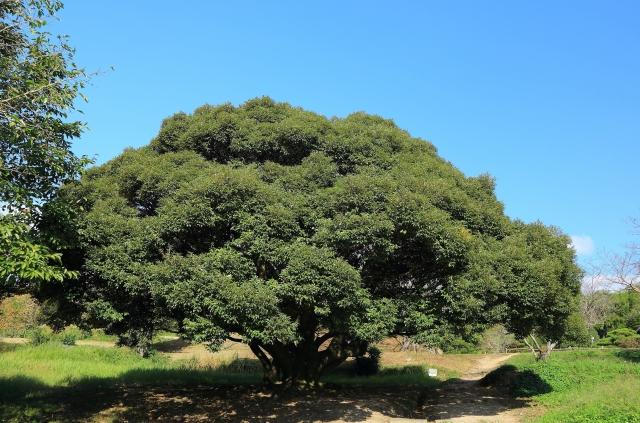 金のなる木