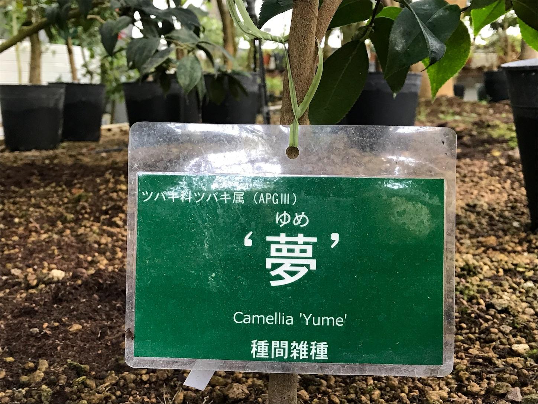 f:id:Yumikoema:20190110165250j:image