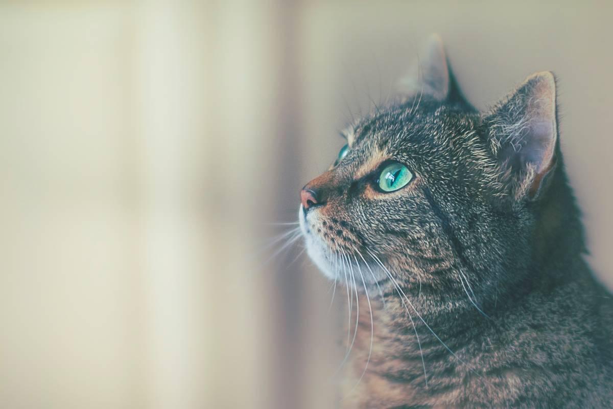 ヘミングウェイ「雨のなかの猫」を読む