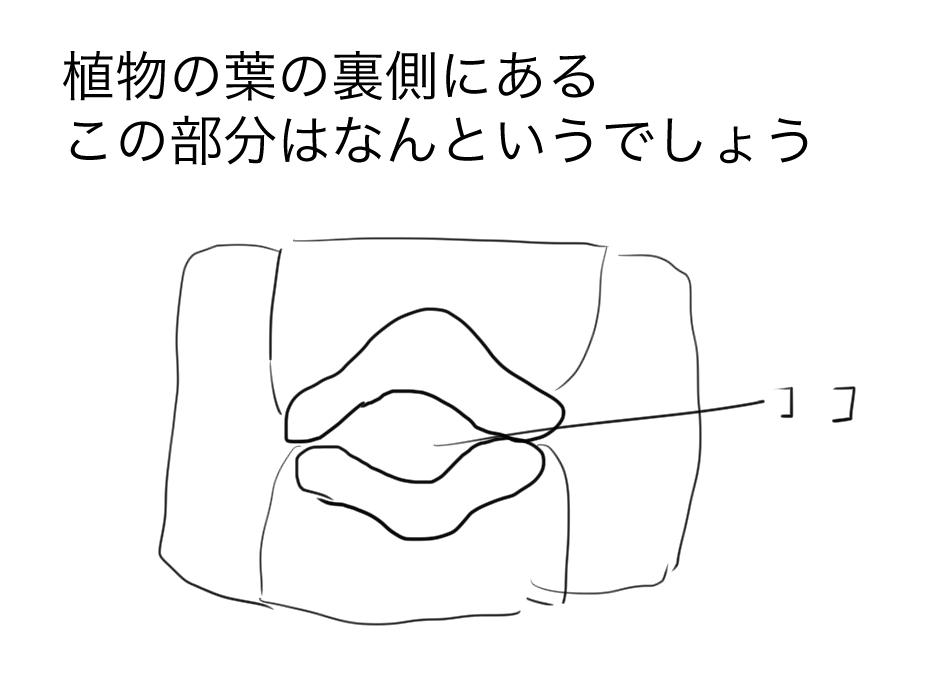 f:id:YutoCruyff:20180308001012j:plain