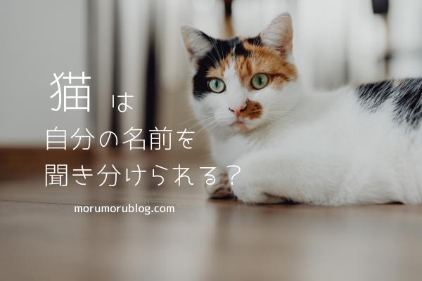 f:id:Yuuki0455:20200503072226p:plain