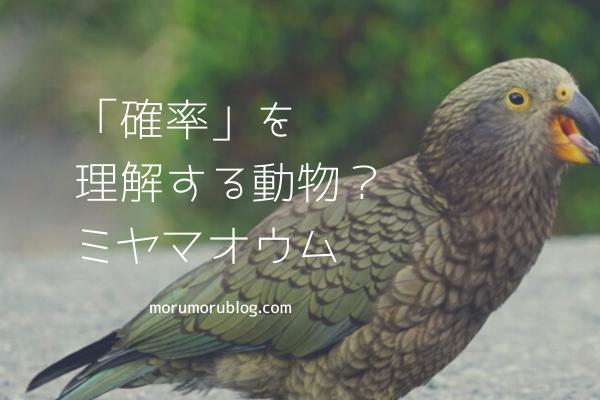 f:id:Yuuki0455:20200503075224p:plain