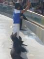 [鴨川シーワールド][水族館]アシカのショー
