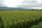 安曇野 田園と山並み