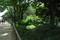 大王わさび農場 緑が綺麗