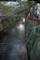 目黒川 緑が優しい