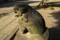 猫背な狛犬