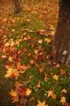 苔の緑 アンド 紅葉した落ち葉