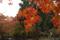 花貫渓谷へ向かう途中の公園。グラデーションが綺麗。