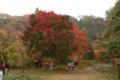 見事に赤い。花貫渓谷の徒歩出発地点。