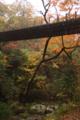絶妙な感じで吊り橋に触れない木。