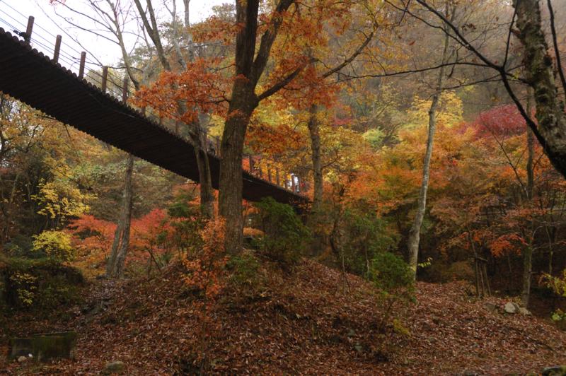 降り積もった落ち葉で地面まで赤くみえる