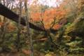 わけのわからないヒョロヒョロした木が鮮やかなオレンジ色の葉をつけ