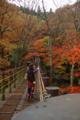 花貫渓谷の見所、吊り橋。雨で全体のトーンが暗くてそのぶん鮮やか