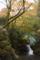 下滝。苔むした木の緑とオレンジの葉、白い滝。